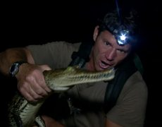 Steve Backshall meets a young american crocodile