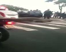 Sea lion is crossing the road in Brazil