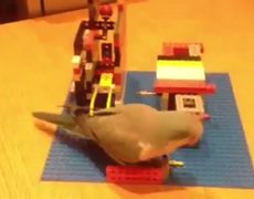 Bird playing with Lego