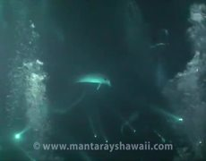 Dolphin Rescue By Divers Hawaii Full Video