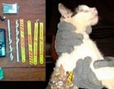 Detienen a gato traficante en cárcel de Brasil