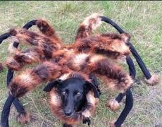 Funny Prank Mutant Giant Spider Dog