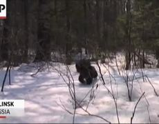 Russian Bear Cubs Rescued
