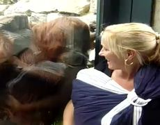Amazing Orangutan Wants To See Baby Viral Video