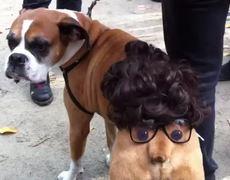 Cute Dog Halloween Dog Parade