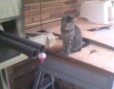 ATST cat playhouse
