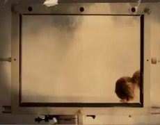 Bebe Mi Guapo Official Music Video