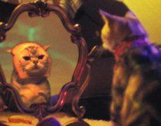 Litter Genie I Haz a Catnip in Mah Head Music Video