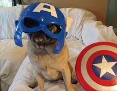 Avenger Pugs Earths Mightiest Heroes Are