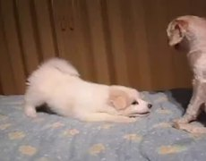 Cachorro Jugando FAIL