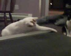 Two cats vs treadmill