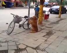 Dog Warden bicycle