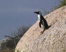 Funny Penguin Fail