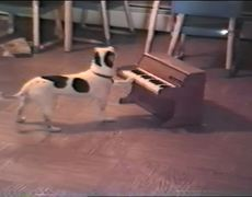 Dog plays piano and sings Amazing