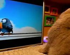 Cat watching birds of Pixar