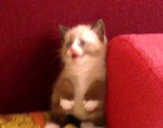 Kitten Cute Fear of the dryer