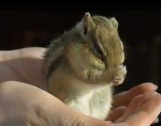 slow motion chipmunk