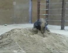Elefante jugando en la Arena