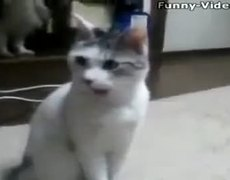 Shocked cats First time watching star wars Amazing