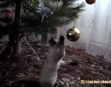 Why Cats Love Christmas