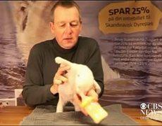 Denmark Zoo Polar bear cub fed by hand