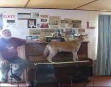 Perro toca el piano y canta