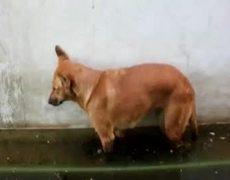 Animal FAIL Compilation