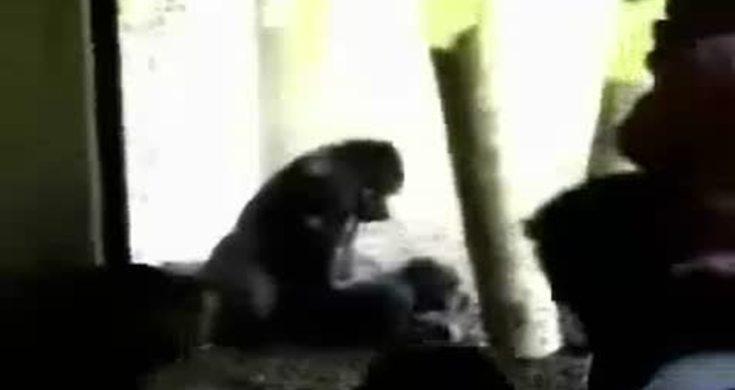 gorilla xxx videoteen pics af fisse