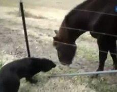 Juegos de un perro y un caballo