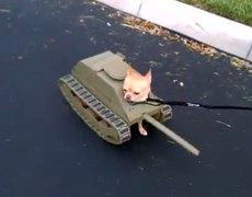 Costume Halloween - Tank Dog