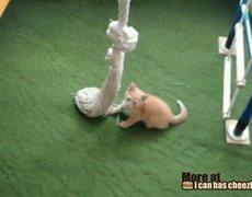 Kitty Rope Climb