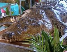 Costa Rica's most famous reptile dies