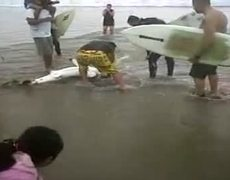 Baby Shark Rescued in Venice Beach