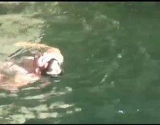 Fat Man Accidental Belly Flop FAIL