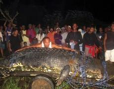 Giant crocodile captured alive in Philippines