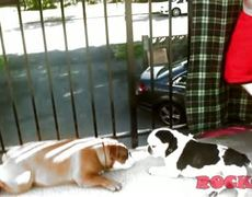 My Bulldog Romance