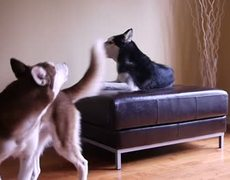 Two Dogs Get Into A Heated (Subtitled) Argument
