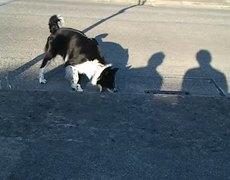Dog Attacks Evil Shadow Hand