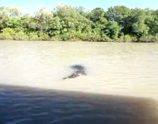 Amazing crocodile jump