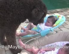 Dog Wants To Play Fetch With Babies