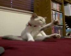 Classy modest cat