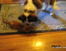 Perro y gato juegan con una cuerda