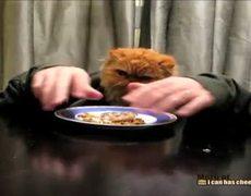 Cat Has Human Hands