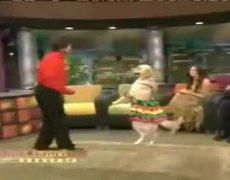 Dog dances mambo on live show