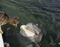 Gato Jugando con un delfin