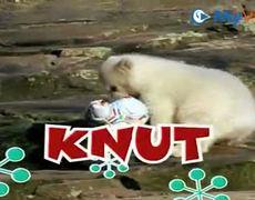 Knut Song
