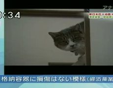 Woman Comes Back Home And Finds Her Cat Survived The Tsunami