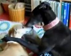 Dog romance fail