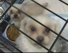 Cachorros en Sociedad Protectora de Animales...