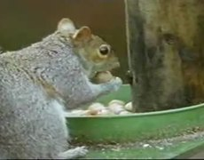Mission Impossible Squirrel